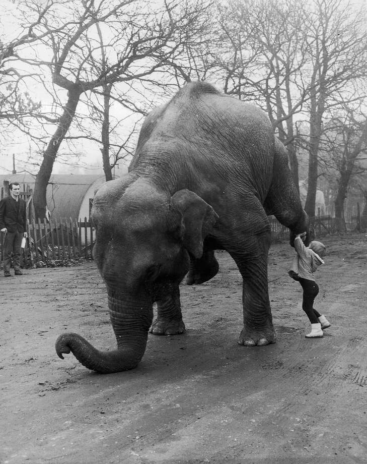 Bonus: Elephants as petsKid's don't try this at home. Photo: William Vanderson, Getty Images / Hulton Archive