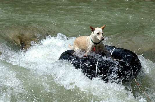 METR O   A tubing dog hangs ten over the Huaco Falls on the Guadalupe River Monday.  The canines owner spilled out of his tube, but the dog negotiated the white water with no trouble.   TUBING ON THE GUADALUPE RIVER MAY 30, 2005  TOM REEL/STAFF Photo: TOM REEL, SAN ANTONIO EXPRESS-NEWS