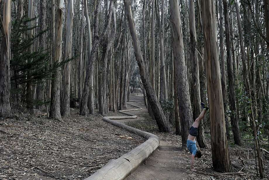"Handstand of trees: Aussie Tim Green exercises by the side of a ""Wood Line"" sculpture by artist Andy Goldsworthy in an eucalyptus grove 