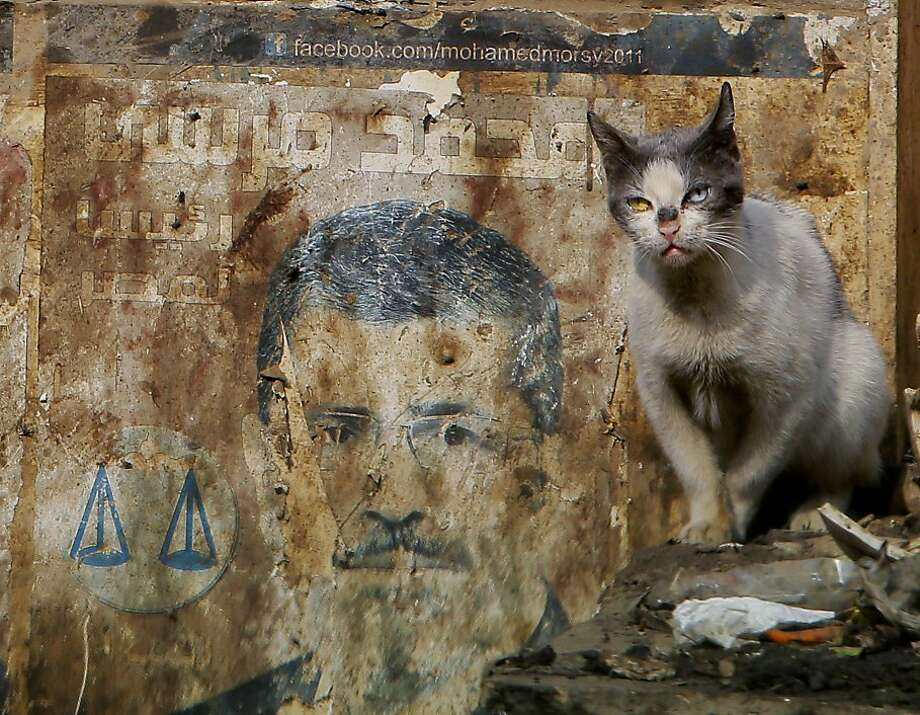 Feral feline:A stray cat stands near a defaced presidential campaign poster of ousted president Mohammed Morsi in Cairo. Photo: Amr Nabil, Associated Press