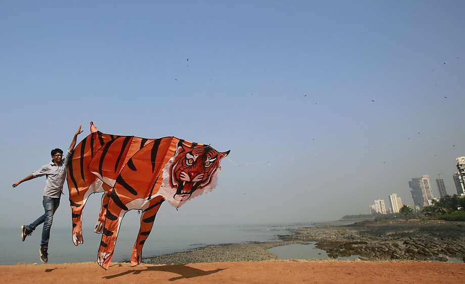 Flying tiger: A kite enthusiast launches his Bengal craft at the International Kite Festival in Mumbai. Photo: Rafiq Maqbool, Associated Press