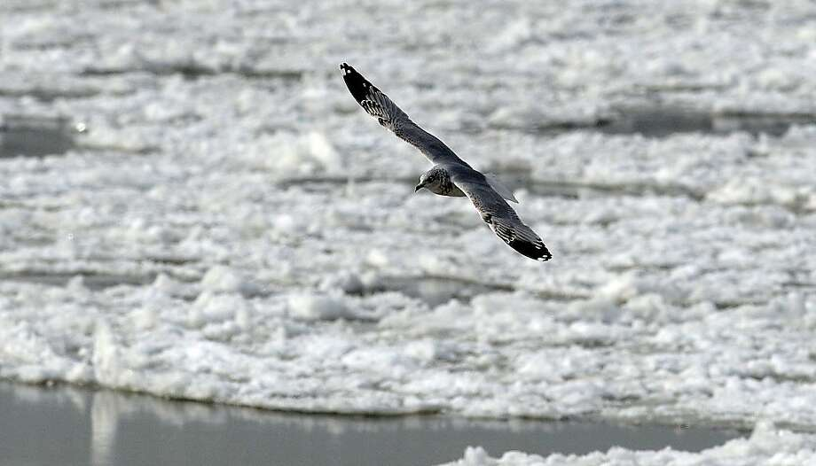 A bird soars over frozen waters of the Washington Channel that parallels the Potomac River. The bitter cold has some advantages, climate scientists say. Photo: Olivier Douliery, McClatchy-Tribune News Service