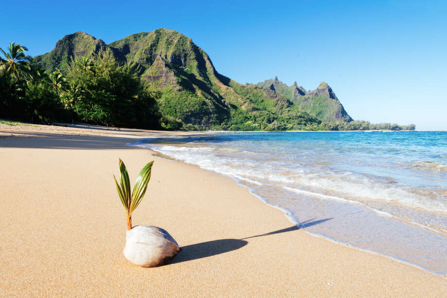 IN: Coconut water. Very, very trendy.  Photo: M Swiet Productions, Getty Images / Flickr RF