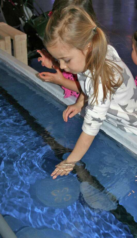 Everyone who visits the Maritime Aquarium at Norwalk, as of Jan. 18, will have the opportunity to do something that parents have warned against for eons: touch the jellies (without getting stung). Photo: Contributed Photo / Connecticut Post Contributed