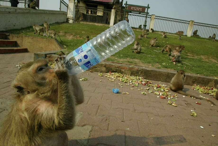 OUT: Bottled water. Nearly half of chefs surveyed said this item is not cool. (Unless you're a monkey in Thailand.) Photo: Paula Bronstein, Getty Images / 2004 Getty Images