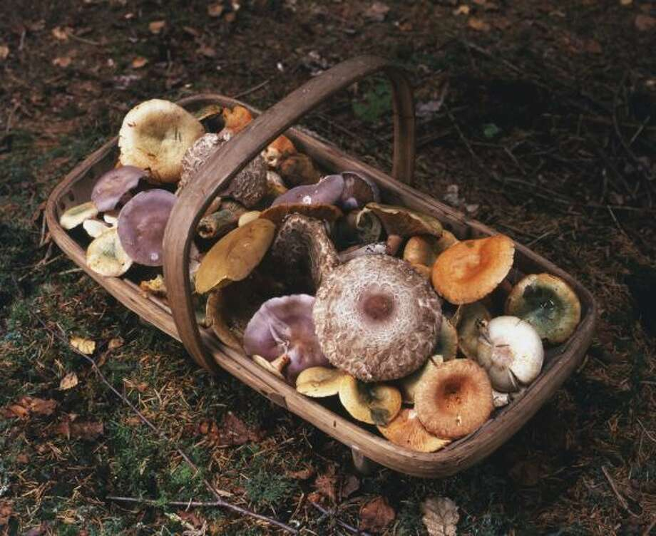 IN: Foraging. Forget high-tech. Wander outside instead to pick mushrooms, berries and leaves for your dinner. Photo: Courtesy