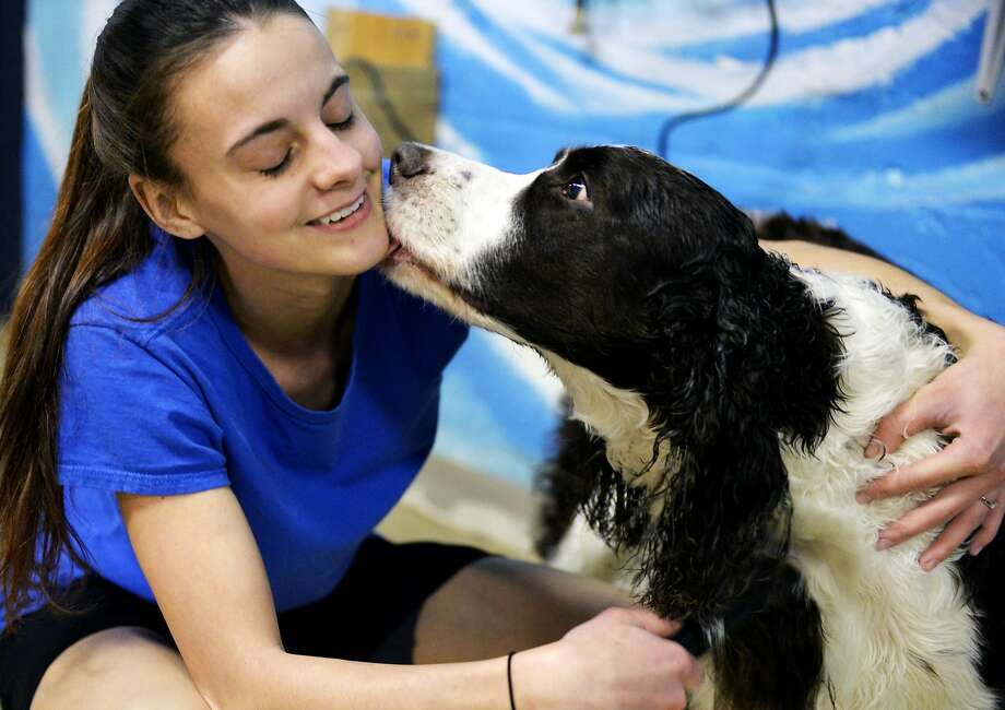 One good bath deserves another: Dog handler Rikki Herbst gets a kiss from Charlie the English Springer Spaniel as she dries and fluffs his coat in Spring Garden Township, Pa. Charlie had just finished an hour-long swim at Morgan's Paws Pet Care Center, which offers swim 