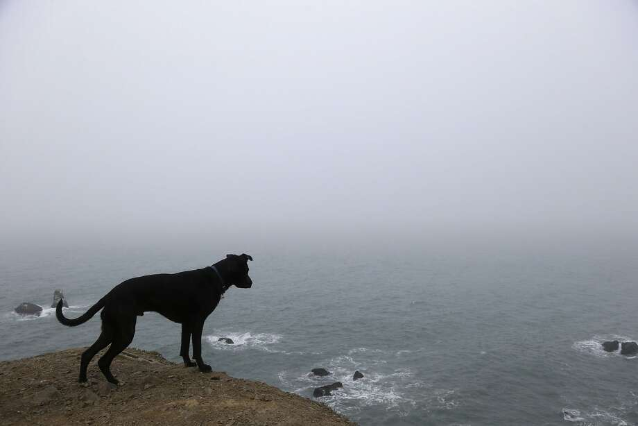 Why did you throw the ball down there? A dog named Avocado peers over a cliff overlooking the fog-covered Pacific Ocean in San 
