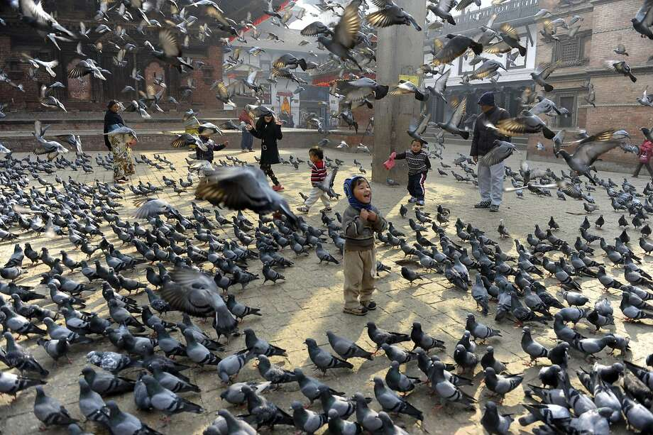 Give us your crumbs: Nepalese children feed pigeons in Kathmandu's famous Durbar Square. Photo: Prakash Mathema, AFP/Getty Images