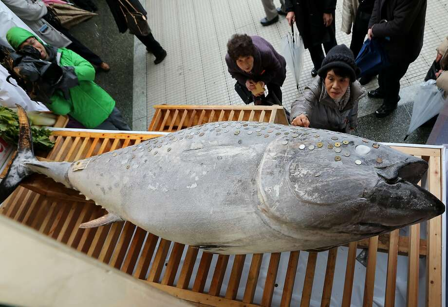 Fish wish:A Japanese woman places a coin on a bluefin tuna weighing more than 500 pounds at Nishinomiya Shrine, the chief shrine 