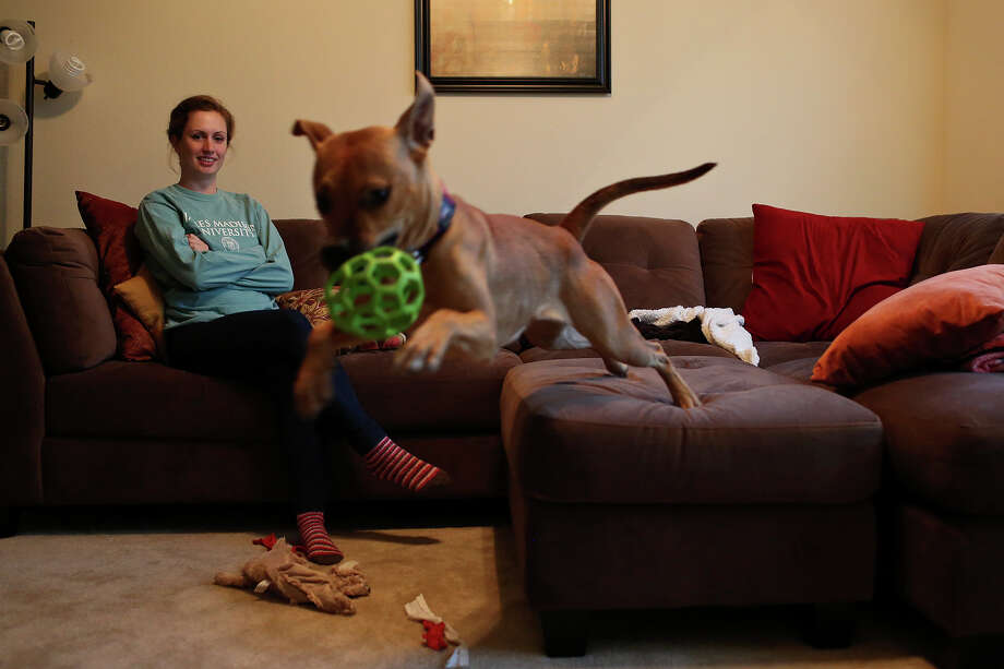 Alyssa Roessel watches Lucy play in her apartment in San Antonio on Jan. 3, 2013. Roessel adopted Lucy after meeting her while working as a volunteer at the San Antonio Pets Alive adoption center. Photo: Lisa Krantz, San Antonio Express-News / San Antonio Express-News