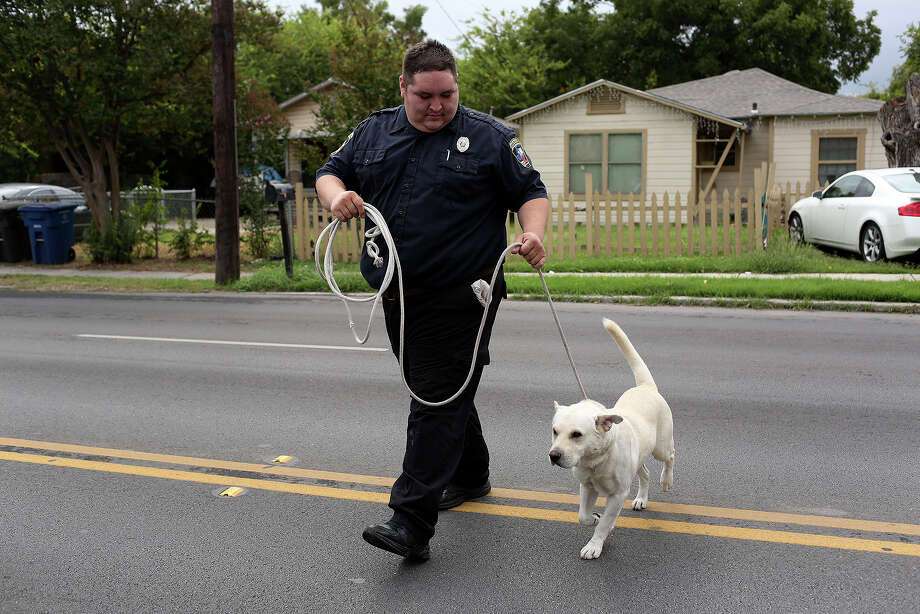Animal Care Services officer Joe Cortez walks with Chuck, now named Duke, from the sidewalk he was picked up on to the Animal Care Services truck in San Antonio on October 30, 2013. Photo: Lisa Krantz, San Antonio Express-News / San Antonio Express-News