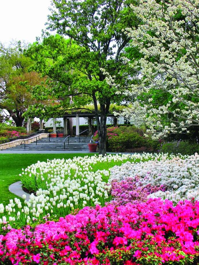 Toward the end of Dallas Blooms, 3,000 azaleas will put on a show.Related Here & There blog: A color explosion at Dallas Blooms Photo: Courtesy Dallas Arboretum