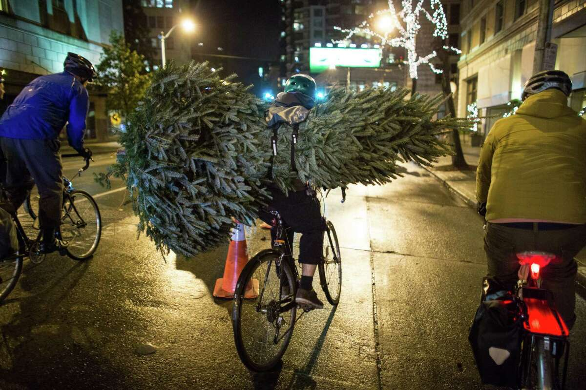 A Christmas tree is carried on a cyclist's back from Westlake Park to Seattle's Golden Gardens beach park in what has become an annual post-Christmas tradition. During the event people bring trees, most via bicycle, as part of a weekly bike ride organized by .83, an online group for cyclists. About 100 bicycle riders carried the trees to the popular park, most strapped to their backs or bike frames.