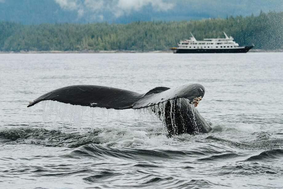 A whale tail is visible from Un-Cruise Adventures' Safari Endeavour cruise ship. Small expedition boats are also great for seeing nature on land. Photo: Cameron Zegers, Un-Cruise Adventures
