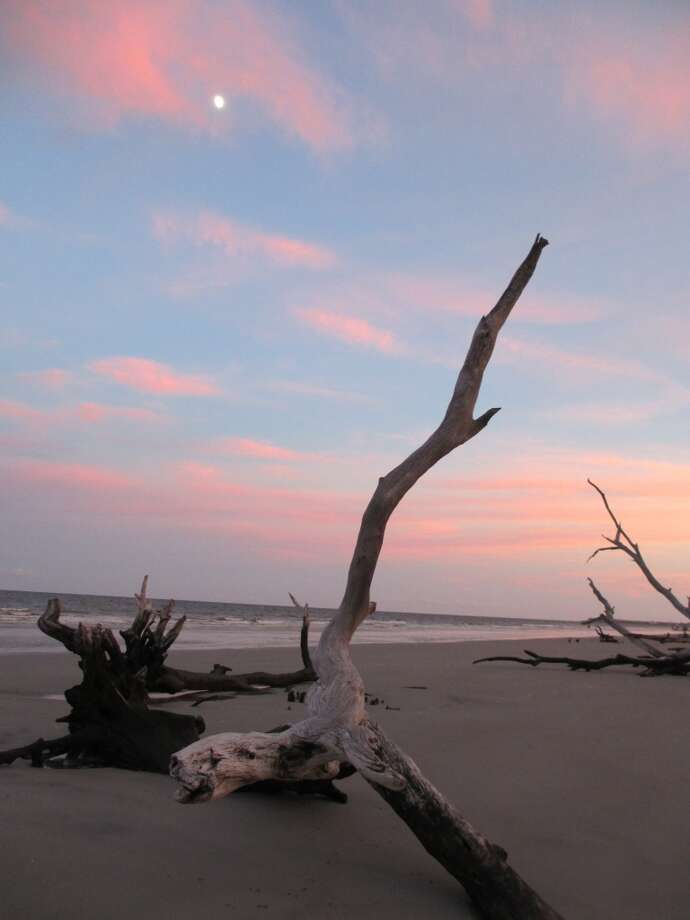 Some of the dead trees left behind by erosion are silhouetted by a sunset on Hunting Island. Photo: Terry Scott Bertling, San Antonio Express-News
