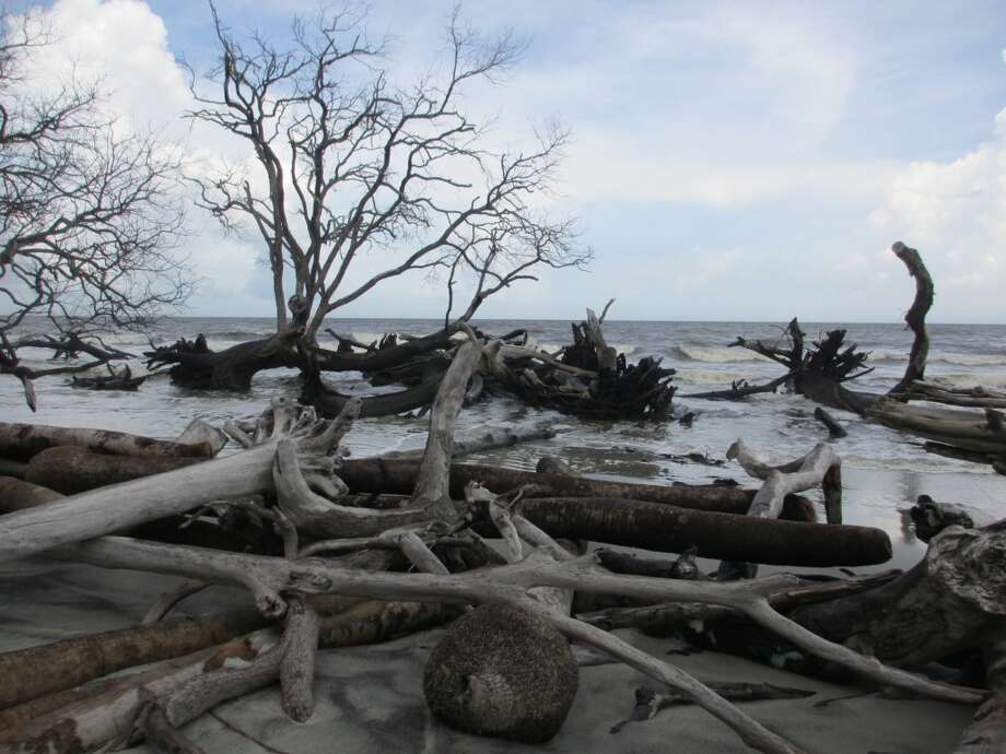 Years of erosion on the Beaufort barrier islands that include Hunting Island have left behind many fallen trees and limbs on the south end of Hunting Island, in addition to washing away many of the beach homes once there. Photo: Terry Scott Bertling, San Antonio Express-News