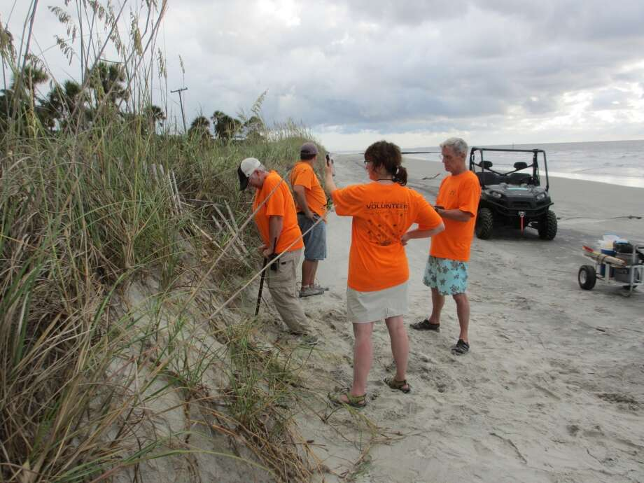Turtle patrol volunteers walk the beach several times a day, looking for evidence of fresh nests that need to be protected from predators. Photo: Terry Scott Bertling, San Antonio Express-News