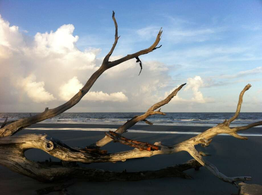 Limbs from a fallen tree on the beach catch the afternoon sun. Photo: Terry Scott Bertling, San Antonio Express-News