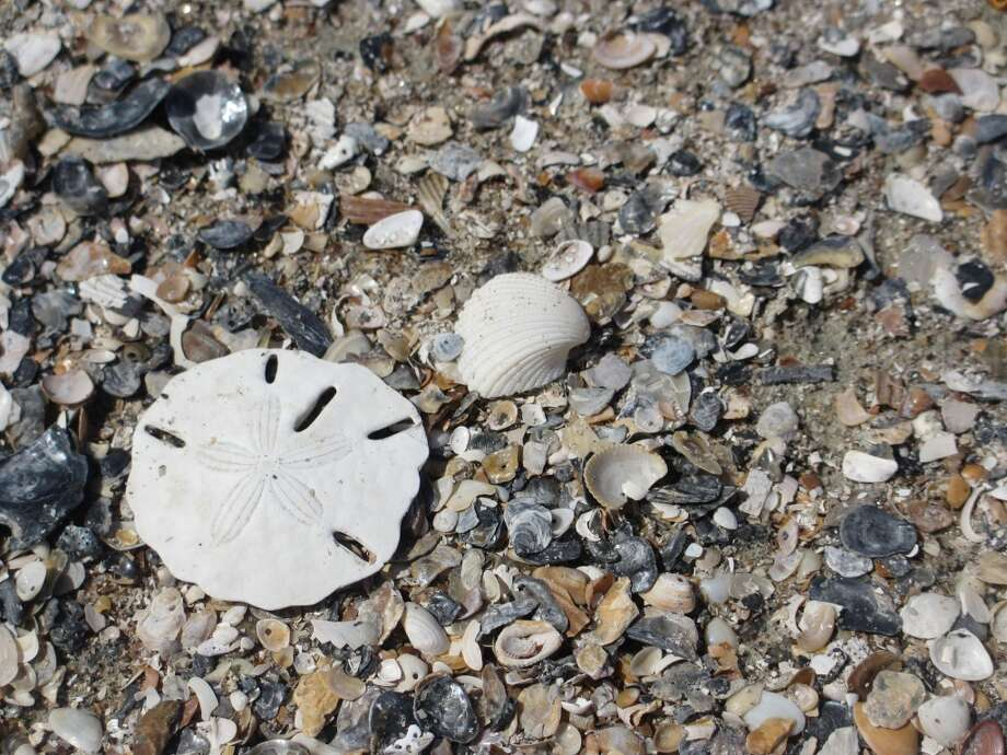 Capers Walk is a popular spot for looking for beautiful sea shells. Photo: Terry Scott Bertling, San Antonio Express-News