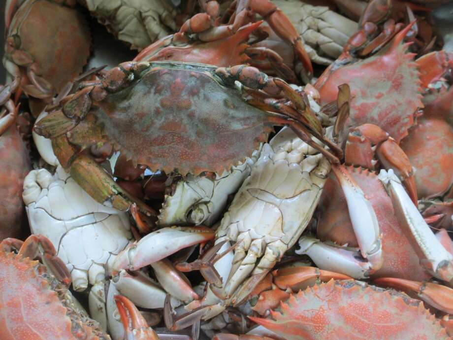 A pot of fresh steamed crab await the work of crab pickers helping with the crab cakes that will be served for dinner. Photo: Terry Scott Bertling, San Antonio Express-News