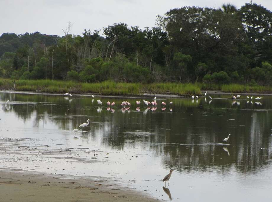 A variety of birds, including the pink roseate spoonbills, are seen in the lagoon regularly. Photo: Terry Scott Bertling, San Antonio Express-News