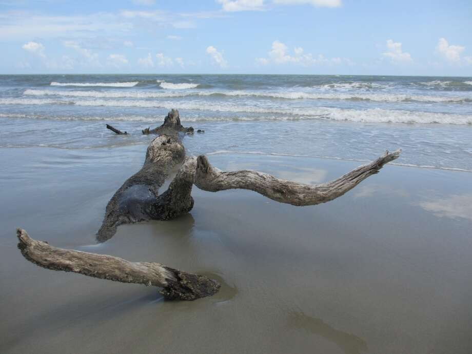 Erosion has left behind a few big tree limbs on the Dewees beach. Photo: Terry Scott Bertling, San Antonio Express-News