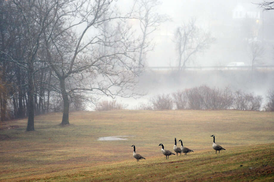 Canadian geese hang out in Beardsley Park waiting for a heavy fog to lift in Bridgeport, Conn. on Saturday January 11, 2014. Photo: Christian Abraham / Connecticut Post