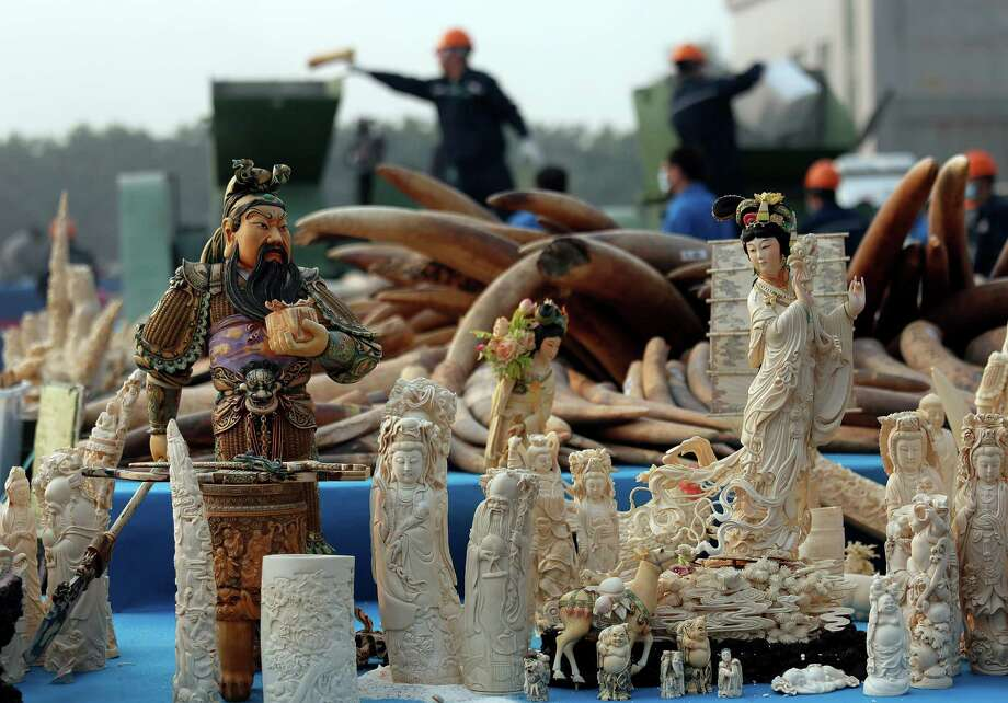 Workers, background, destroy confiscated ivory in Dongguan, southern Guangdong province, China, Monday, Jan. 6, 2014. China destroyed about 6 tons of illegal ivory from its stockpile on Monday, in an unprecedented move wildlife groups say shows growing concern about the black market trade by authorities in the world's biggest market for elephant tusks. Photo: Vincent Yu, AP  / AP2014