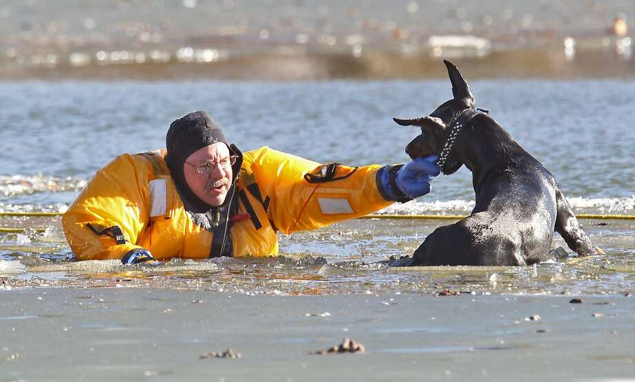 Wild goose chase on thin ice:St. Louis firefighter Stan Baynes holds a Doberman named Diablo above water so the pooch can be rescued from the lake in the city's O'Fallon Park. Diablo's owner said the dog fell through the ice while chasing a goose. Photo: J.B. Forbes, Associated Press