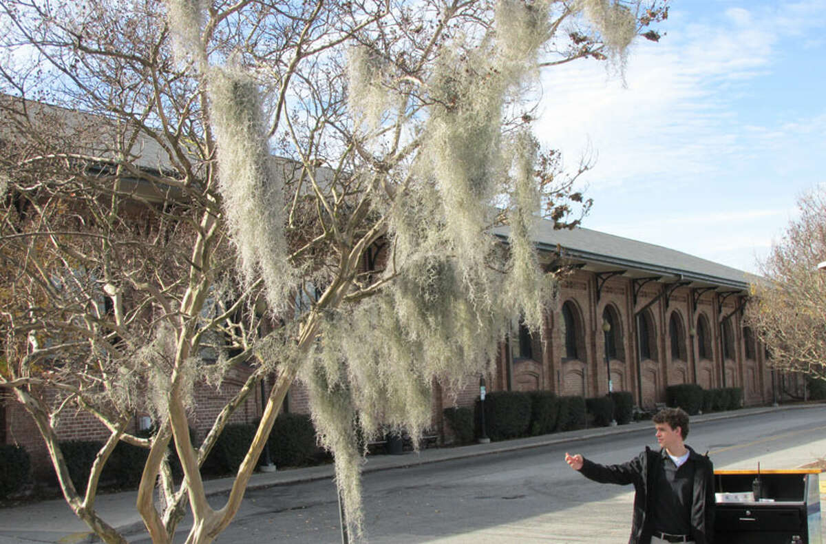 Spanish Moss on tree outside Savannah Visitor Center