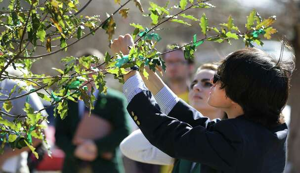 Jonathan Guajardo, Student Body President at The University of the Incarnate Word ties a gree ribbon of a tree planted in memory of fellow student Robert Cameron Redus who was fatally shot by a UIW officer.  The school held a prayer service in honor of Redus.  Monday, Jan. 13, 2013. Photo: BOB OWEN, San Antonio Express-News / © 2012 San Antonio Express-News