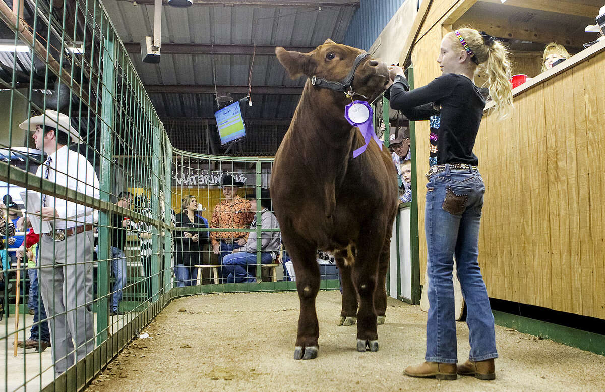 ABOVE: Madyson Arnonld shows her market steer during the Kendall County Junior Livestock Sale Saturday. RIGHT: Kylie McIntosh (right) walks her market swine entry in the ring during the Kendall County Junior Livestock Show and Sale Saturday at the Kendall County Fairgrounds.