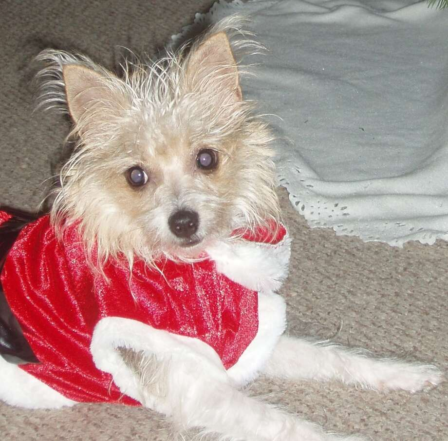 Reader Tracy Labak sent in this photo of her pet.