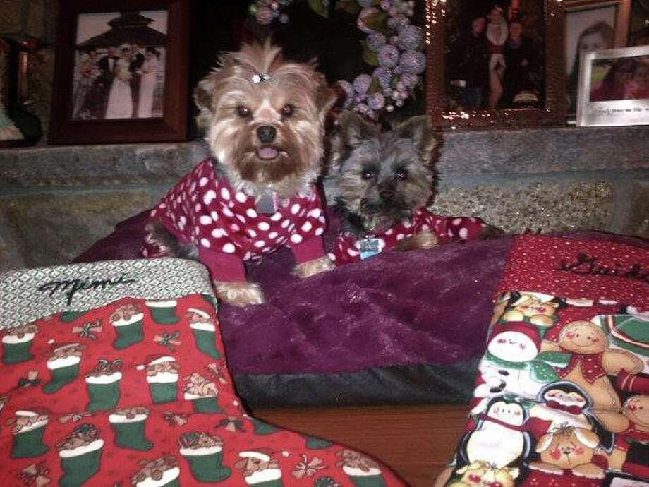 "Reader Yola Smeriglio's dogs Mimi and Guido waiting for ""Santa Paws."" Photo: Yola Smeriglio"