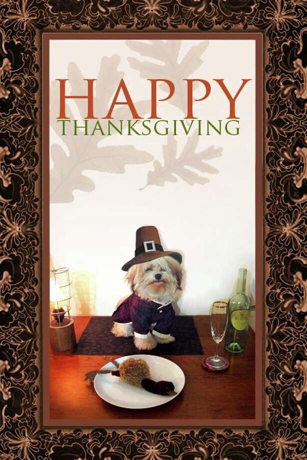 Reader Lauren Levine's dog Imogen really gets into the holidays. Photo: Lauren Levine