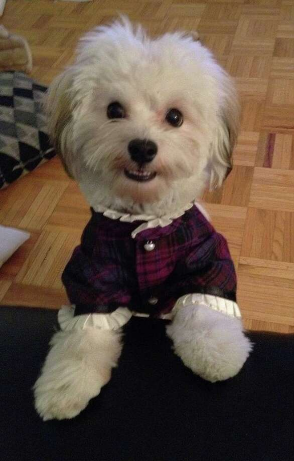 Reader Lauren Levine's Imogen loves to dress up. Here she is in her dress... Photo: Lauren Levine/submitted