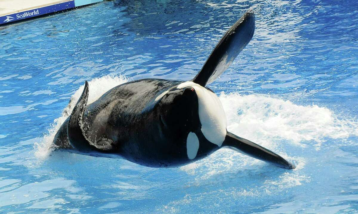 A number of musical acts have canceled performances at SeaWorld in Florida or ended their relationship with the theme park because of the controversial film