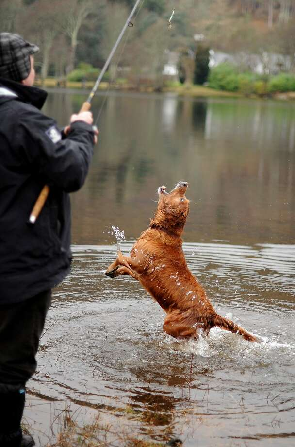 Opening day: Alan Beatham is fishing for salmon on the River Tay in Kenmore, Scotland, but so far the only thing that's biting 