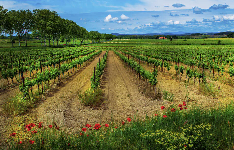 "The southern French countryside is dominated with rows of vines. ""Languedoc's challenge is its diversity: red, white, rosé, still and sparkling, dry and fortified wines are all made here,"" says Wine Enthusiast. Photo: Elfi Kluck, Getty Images / (c) Elfi Kluck"