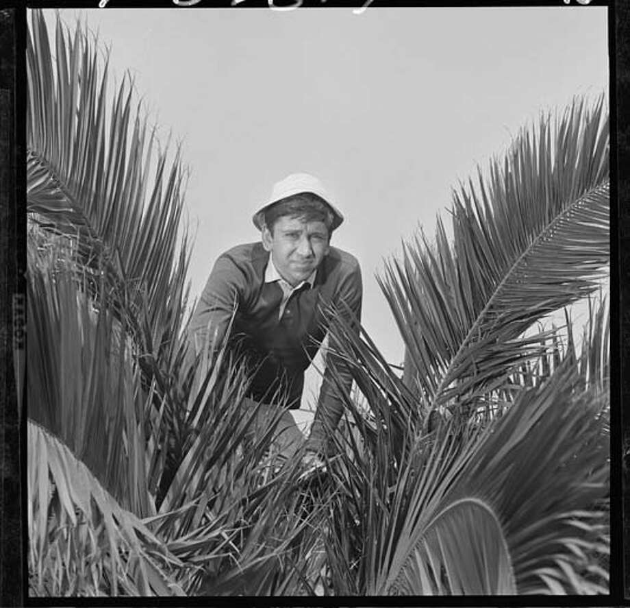 American actor Bob Denver (1935 - 2005), as Gilligan, hides among palm fronds in a scene from an episode of the television comedy 'Gilligan's Island' entitled 'Erika Tiffany Smith to the Rescue' in Los Angeles, California on October 13, 1965. The episode was originally broadcast on December 30, 1965. Photo: CBS Photo Archive, Getty Images / 2008 CBS WORLDWIDE INC.