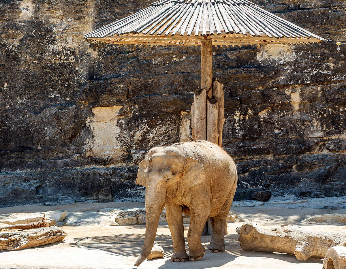The San Antonio Zoo's Lucky has lived alone since the death of her penmate, Boo, early last year.