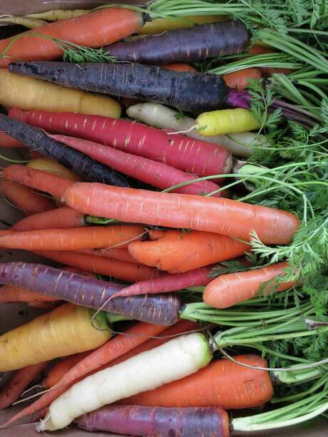 Harris County Master Gardener carrot trials yield a colorful harvest.