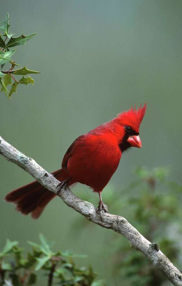 Learn how to encourage birds to visit your garden during a special program at Cornelius Nursery.