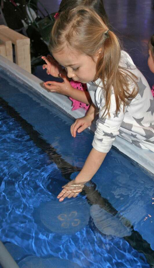 Make waves at the Maritime Aquarium