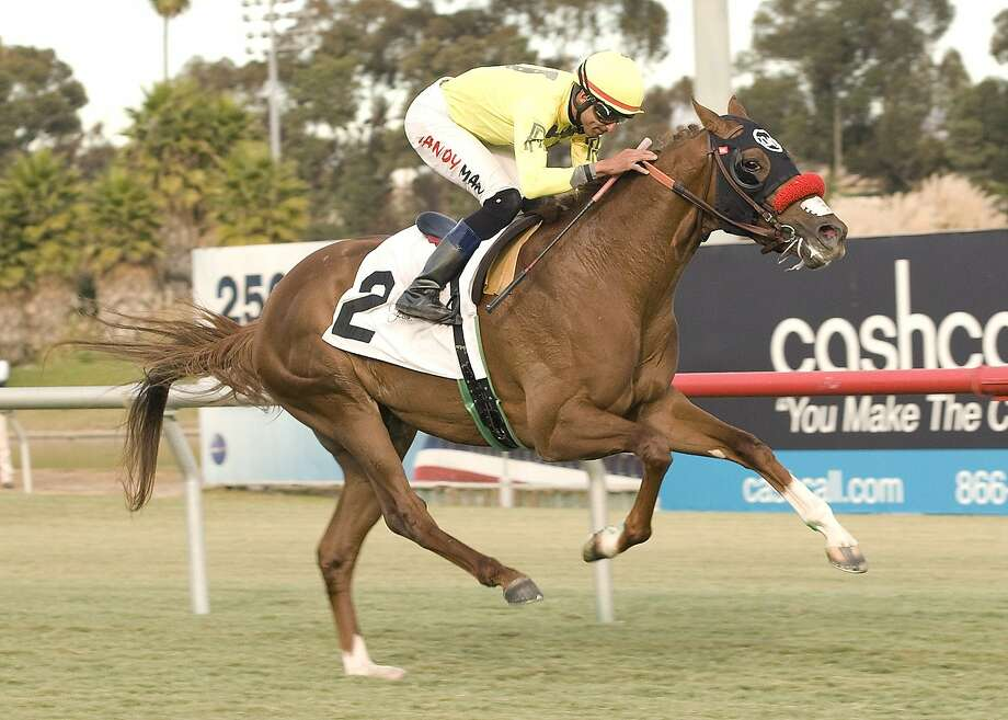 Harbaugh, the equine namesake of the 49ers' coach, wins at Hollywood Park in December with jockey Eddie Maldonado. Photo: Benoit Photography