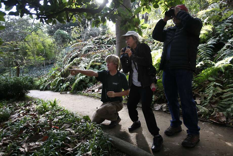 Logan Kahle, 16, points out a rarely seen gray catbird to fellow birders Miki Nakanishi (center) and Bill Corns. Photo: Leah Millis, The Chronicle