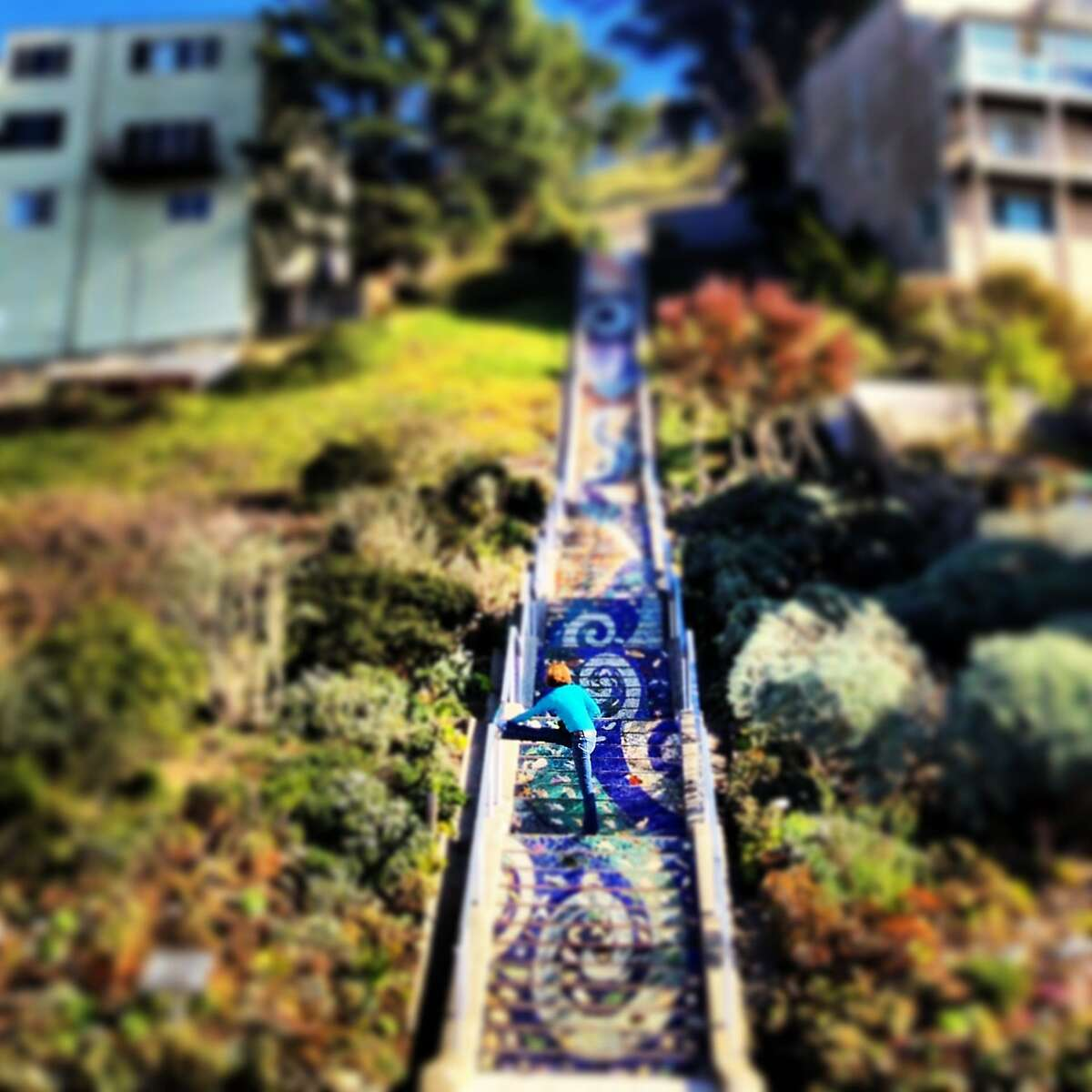 Photographer Charlotte Fechheimer-Picant moved to San Francisco?•s Outer Richmond from France 3 years ago and took this picture mid-December in the Inner Sunset with her iPhone 4S and used the Instagram filters to create the blur effect. ?'I love the Moraga Steps?• dreamy feel. And I love this picture because when you look at it, you?•re not exactly sure what it?•s depicting; whether it?•s a dream, a model, a doll house, a painting or reality.?