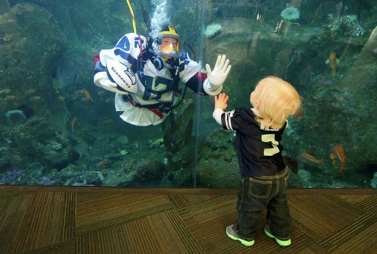Nicole Killebrew, a diver at the Seattle Aquarium, wears a Seattle Seahawks NFL football No. 12 jersey as she greets Colson Bouma, 1, while diving in a large interactive marine life display Friday, Jan. 17, 2014, in Seattle. The Seahawks will play the San Francisco 49ers on Sunday for the NFC championship in Seattle, and the aquarium was one of many locations around the city promoting the gam.