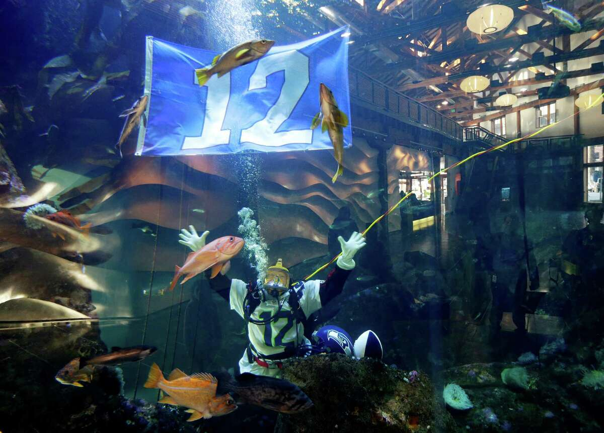 Nicole Killebrew, a diver at the Seattle Aquarium, wears a Seattle Seahawks NFL football No. 12 jersey and as she dives near a 12th Man flag in a large interactive marine life display Friday, Jan. 17, 2014, in Seattle. The Seahawks will play the San Francisco 49ers on Sunday for the NFC championship in Seattle, and the aquarium was one of many locations around the city promoting the game.